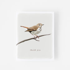 Nature Thank You Cards